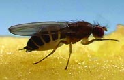 Pest Control for Fruit Flies